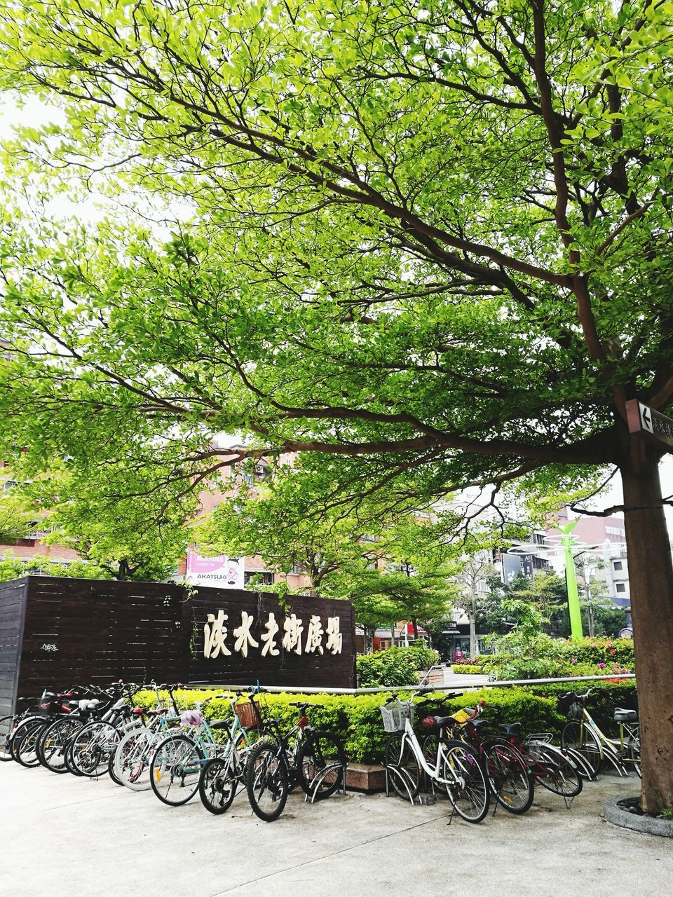 bicycle, tree, text, transportation, communication, mode of transport, day, outdoors, no people, nature