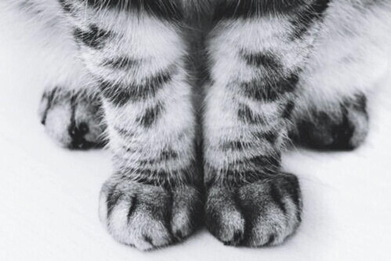 кошечка😺🐱 Cats 🐱