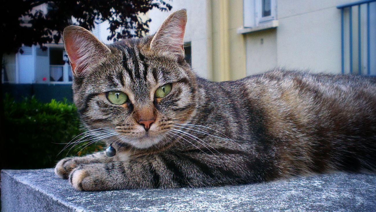 Les chats c'est vraiment des branleurs Les Chats C'est Vraiment Que Des Branleurs