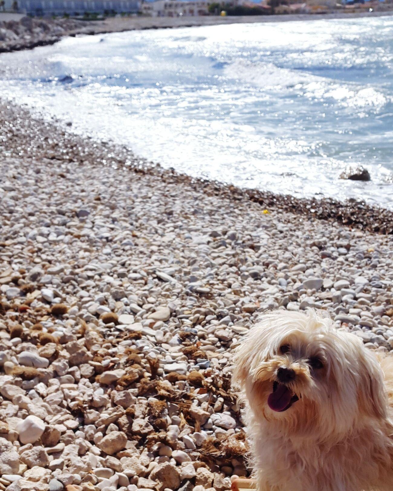 Mydog♡ Beach Summercomealready SPAIN Caneli Today ♥