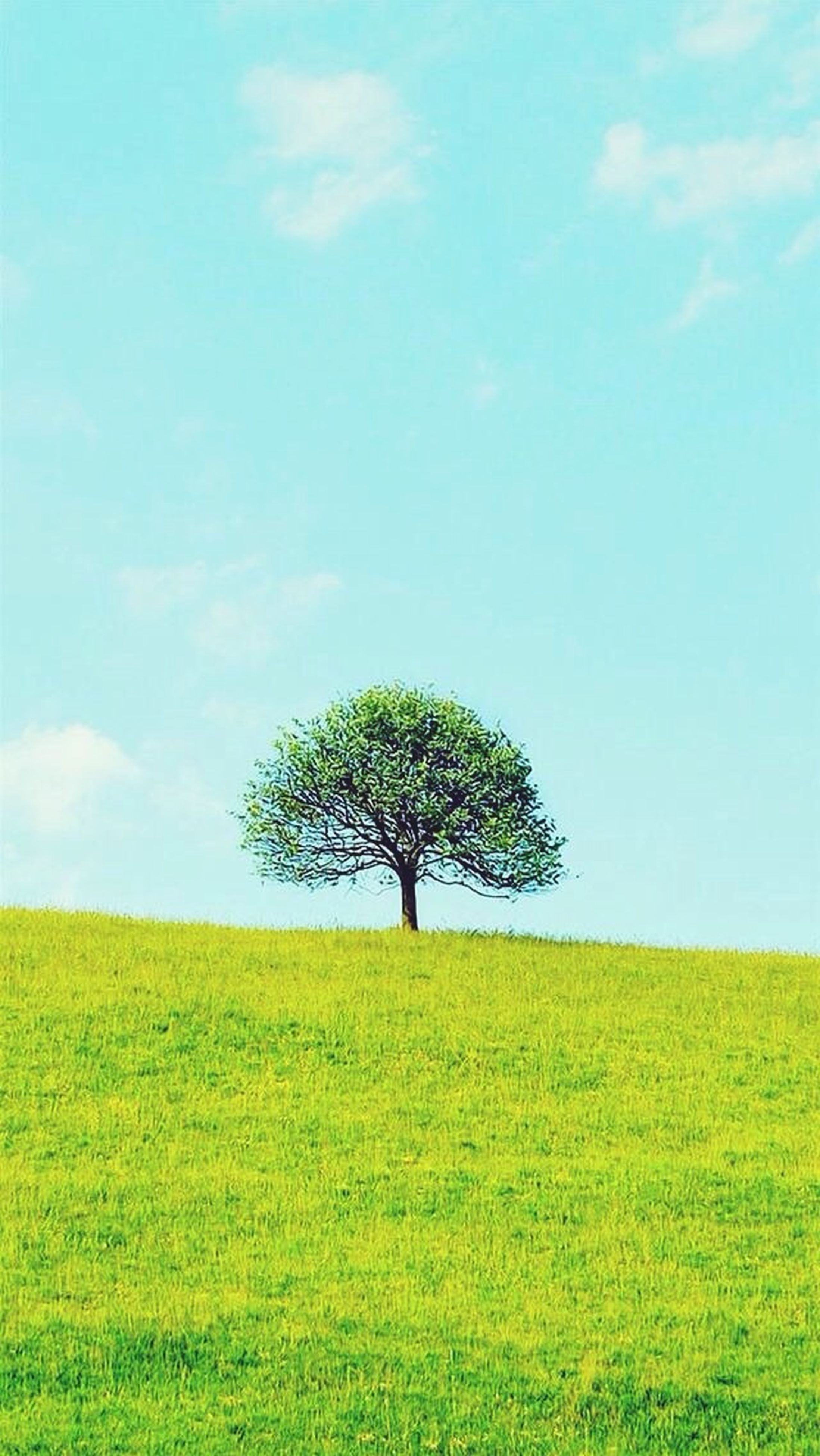 tree, tranquility, grass, tranquil scene, landscape, field, sky, beauty in nature, green color, scenics, growth, nature, single tree, grassy, blue, solitude, idyllic, green, cloud, day