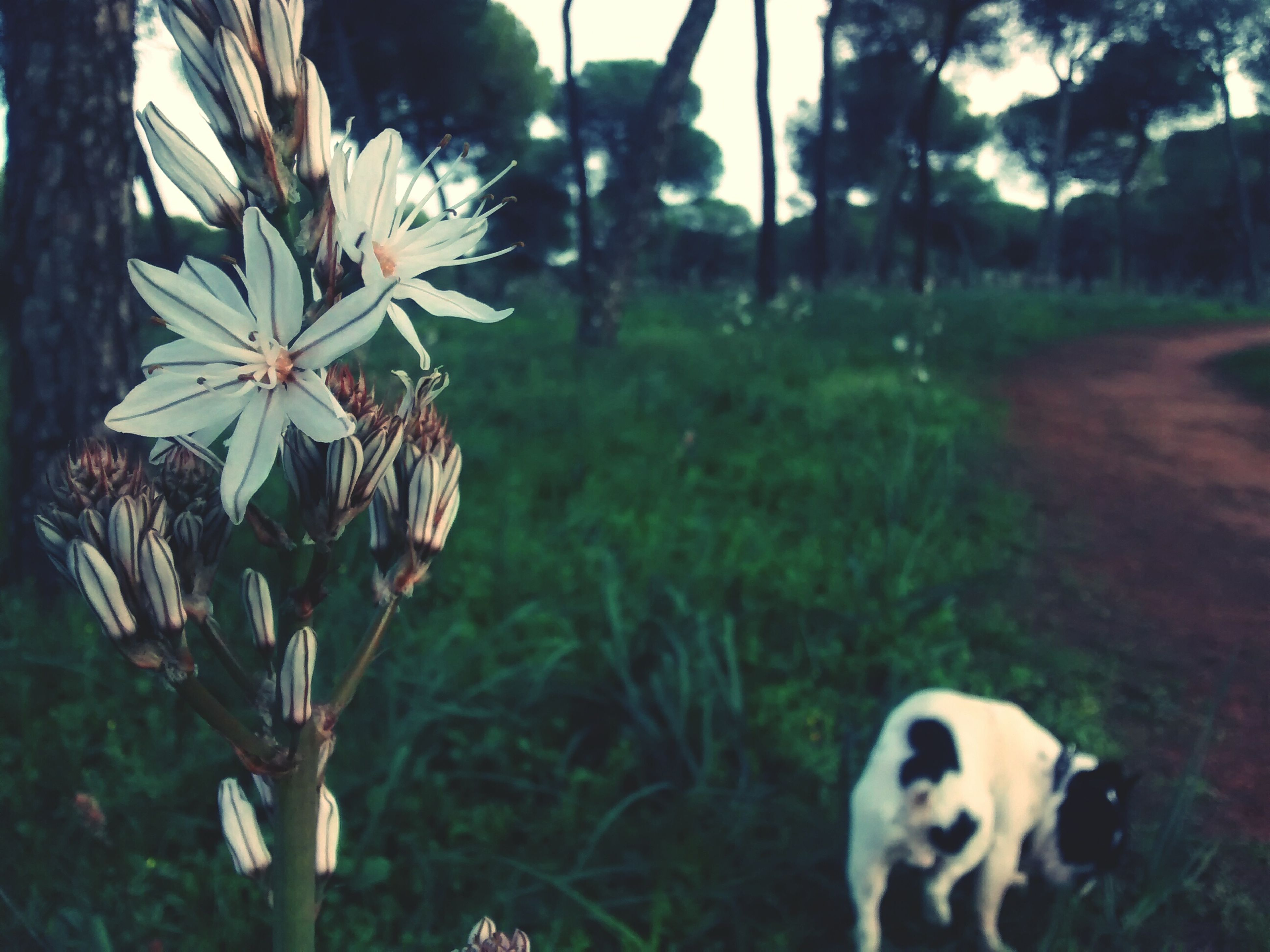 flower, one animal, animal themes, focus on foreground, growth, plant, white color, nature, domestic animals, close-up, pets, fragility, day, mammal, freshness, outdoors, beauty in nature, dog, field, sunlight