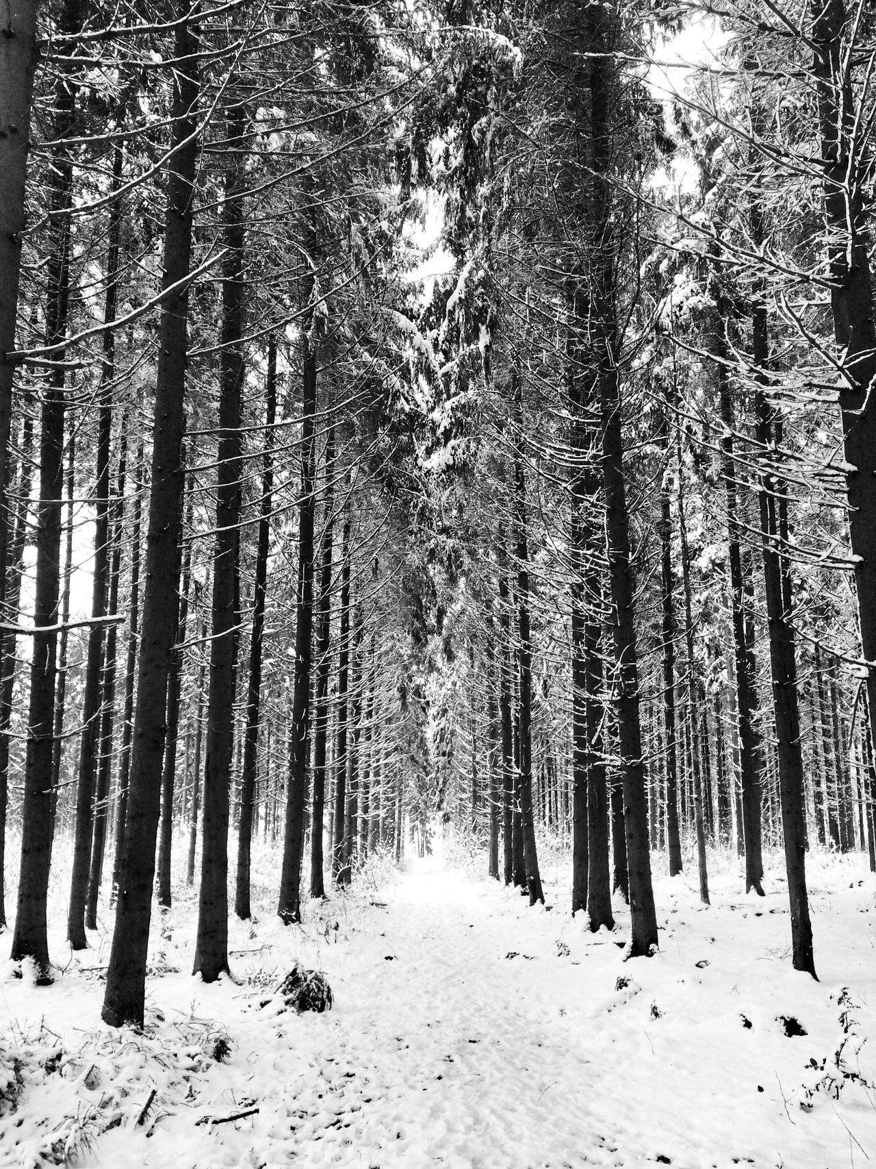 Learn & Shoot: Leading Lines Forest Wald It's Cold Outside Winter Wintertime Landscape Landscape_photography Landscape_Collection Landscapes Landscapes With WhiteWall