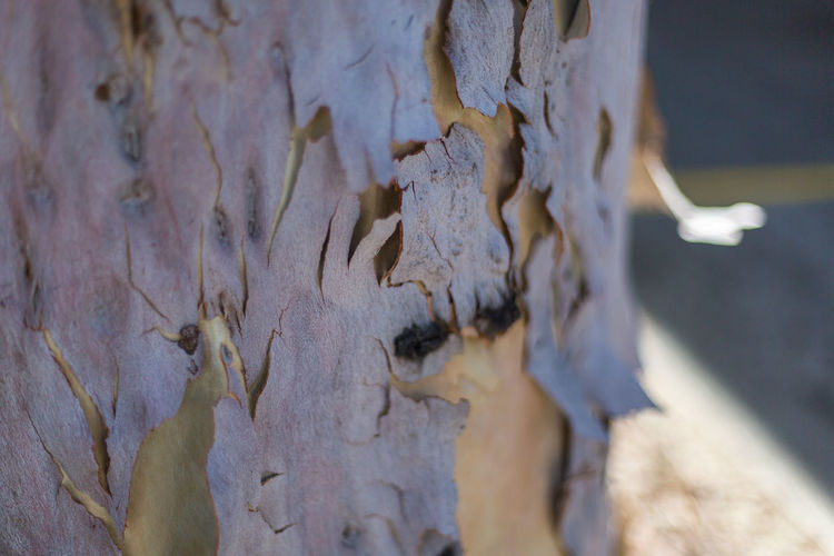 tree barks peeled Barks Of A Tree Barks Peeling Close-up Day Focus On Foreground Nature No People Outdoors Park Park - Man Made Space Shaded Shadows Shallow Depth Of Field Textured  Tree