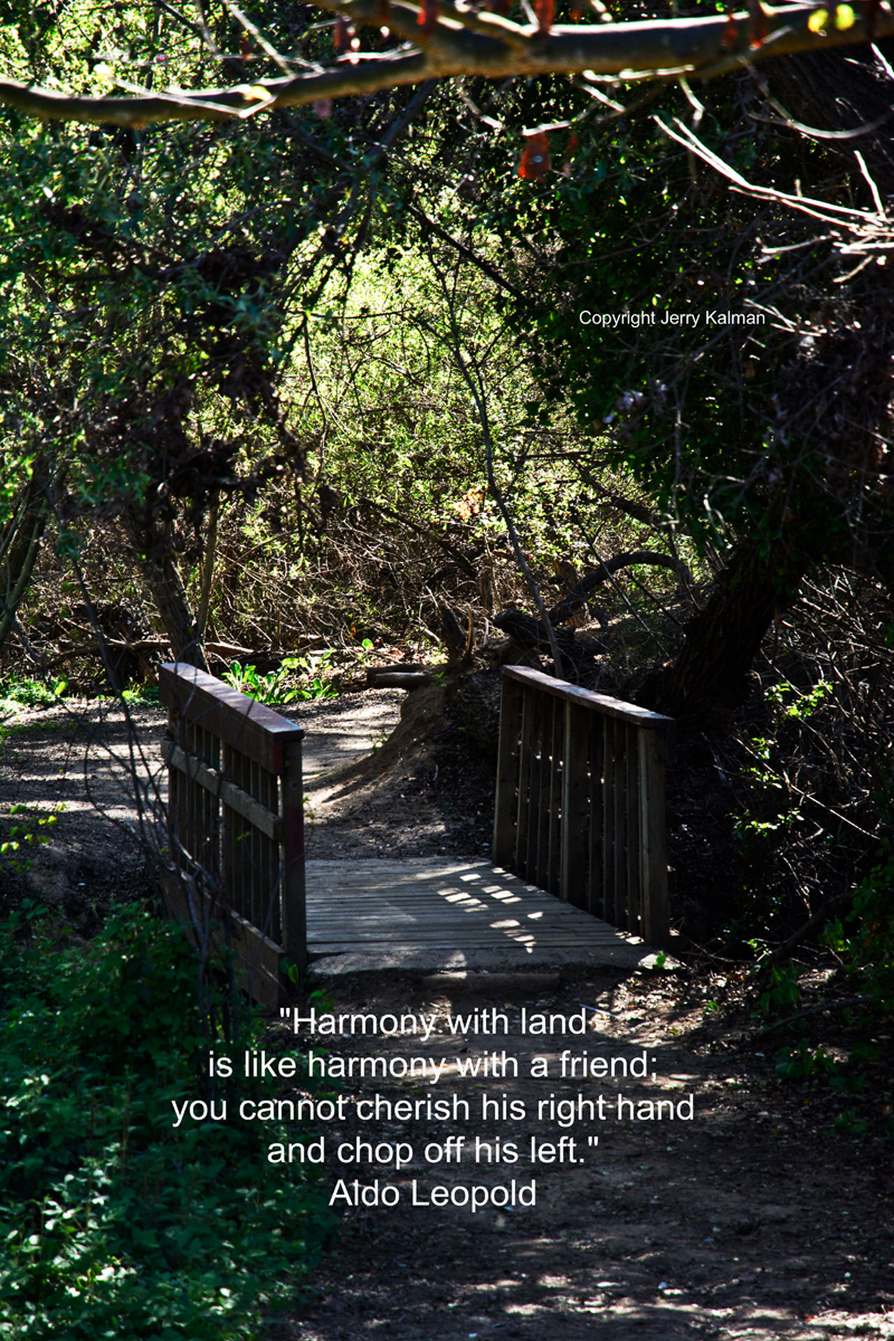 #Conservationist-author #AldoLeopold #quote on his birthday and a scene at #Fallbrook's noted conservation place, the #LosJilguerosPreserve maintained by #FallbrookLandConservancy. Aldo Leopol Connection Fallbrook Land Conservancy First Eyeem Photo Landscape Los Jilgueros Preser Path'brid Q