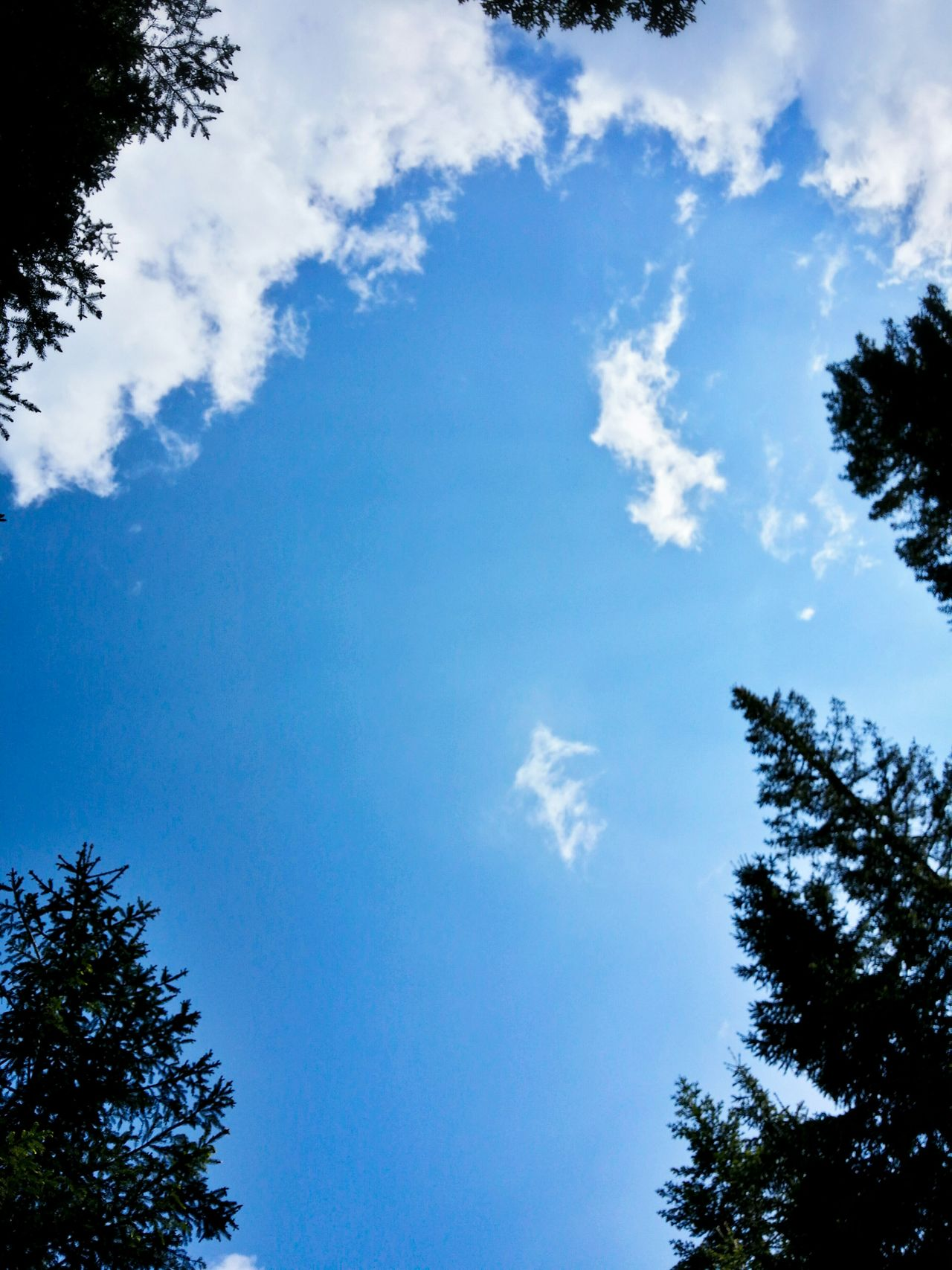 Neck Stretching Never Tired Of Looking Up Juxtaposing Practice Firs And Clouds Asiago Highland Asiago Vicenza Veneto Italy Travel Photography Travel Voyage Traveling Mobile Photography Fine Art Photography