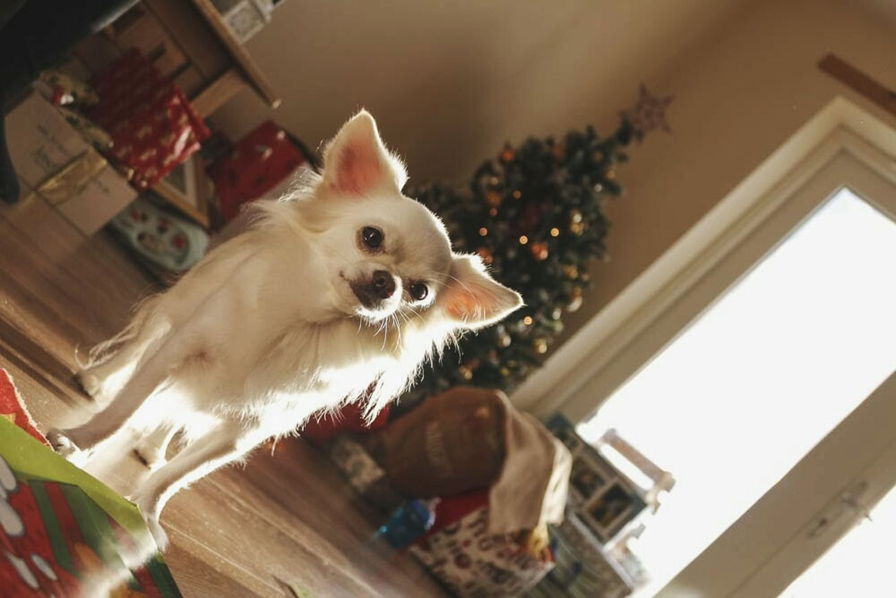 Willow my woophew Elf Pets One Animal Low Angle View Domestic Animals Dog Dogs Of EyeEm Doglover Dogoftheday