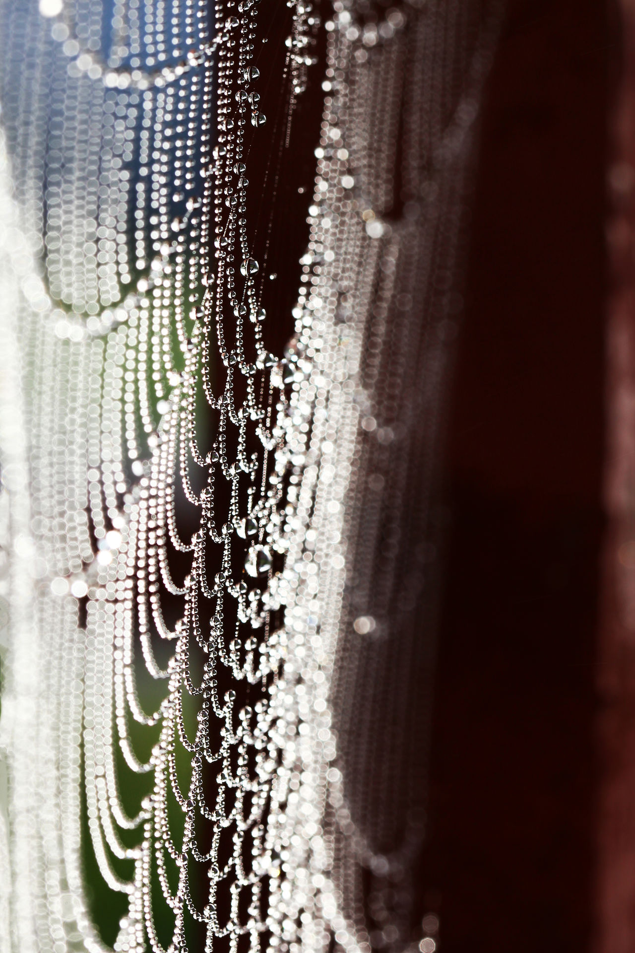 Backgrounds Close-up Day Dew Drop Exceptional Photographs EyeEm Masterclass EyeEm Nature Lover Focus On Foreground Fragility Freshness Hello World Macro Nature Netting No People Outdoors Rain Raindrops Spider Web Summer The Week Of Eyeem Water Wet