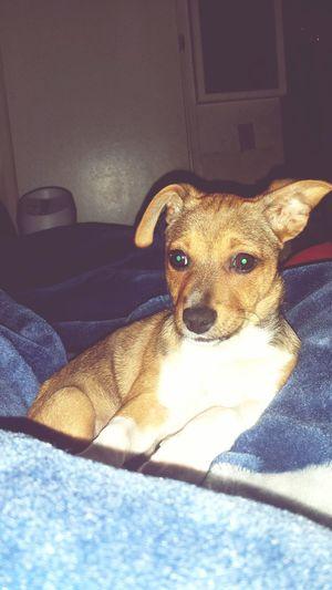 My WCW❤️❤️😘😘 Beagles  Muttstagram Mutt Doglovers Dogstagram Dogs