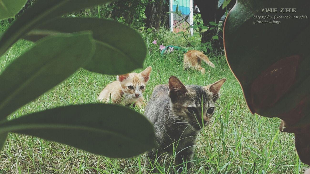 Relaxing Hello World Enjoying Life My Little Cat☺ #บ้านๆๆๆๆๆ #แมวน้อยยยที่บ้านคิดถึงจัง #เพิ่งจะออกมาจากบ้านเอง ????