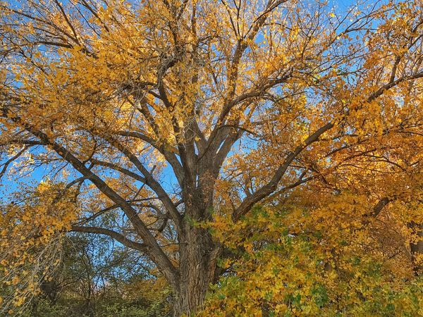 Tree Nature Autumn Low Angle View Beauty In Nature Change Outdoors Branch No People Growth Forest Tranquility Yellow Day Sky Scenics