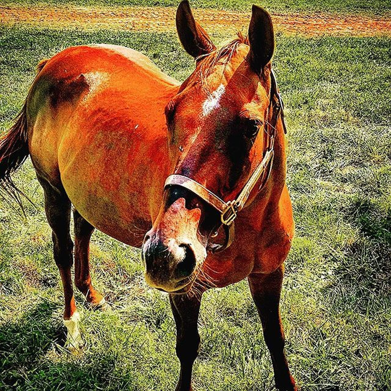 Horsing around! RamseyFarm Thoroughbred Farms Selfie Thoroghbredracing