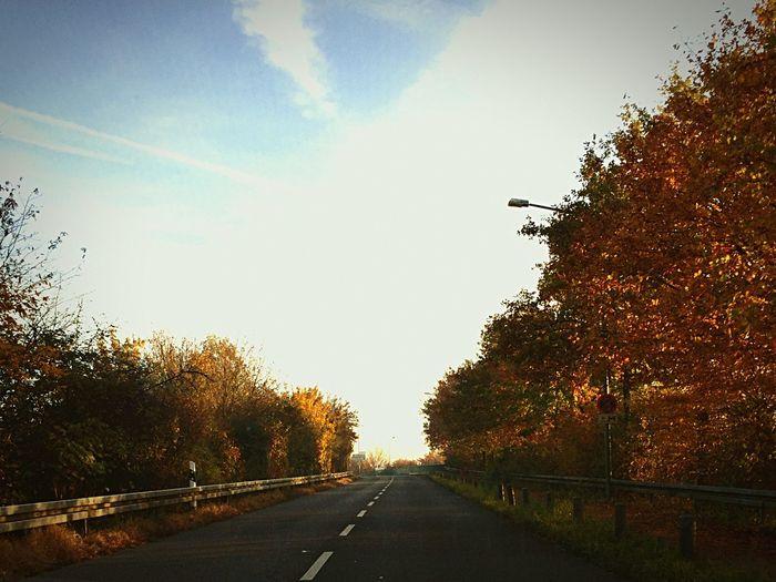 Autumn Leaves Autumn Colors Autumn Autumn🍁🍁🍁 Streetphotography Trees