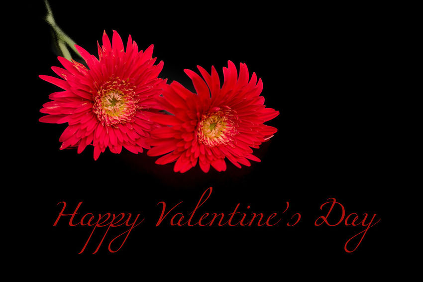 Valentine's Day Card Design, Happy Valentine's Day, Valentine's Day Greetings Background Texture Backgrounds Calendar Card Design Couple - Relationship Design Emotion Flower Flowers Greetings Card Happiness Happy People Happy Valentine's Day Heart Shape Heart ❤ Isolated Isolated Photograph Love ♥ Lovely Photography Travel Valentine Valentine's Day  Valentine's Day Card Wall