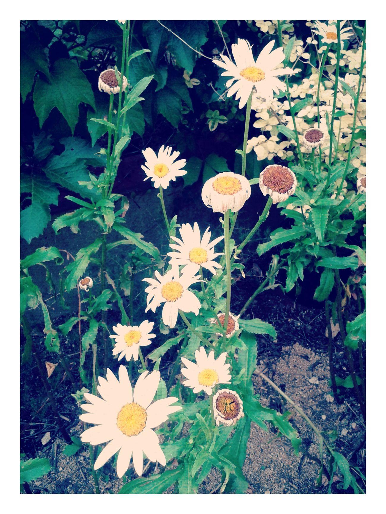 Les flors es baden sense esforç i moren en silenci, encara són fidels a la crida del temps Flors Nature