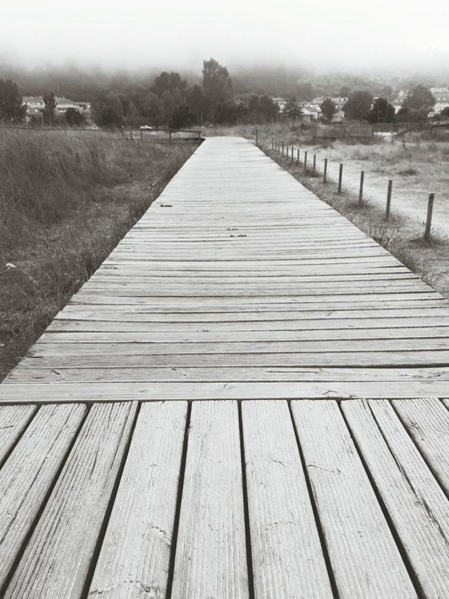 Wood - Material The Way Forward