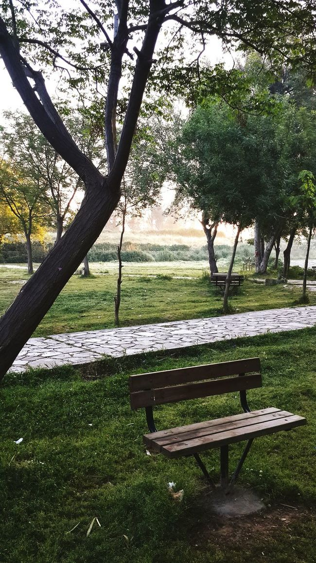 Nature On Your Doorstep Park Garden Nature EyeEm Nature Lover No People Empty Empty Places Wooden Plants Beauty In Nature Still Life Getting Inspired Trees Spring Evergreen Simplicity Tree Grass Empty Bench Bench Chair Empty Seat Park Bench Wood