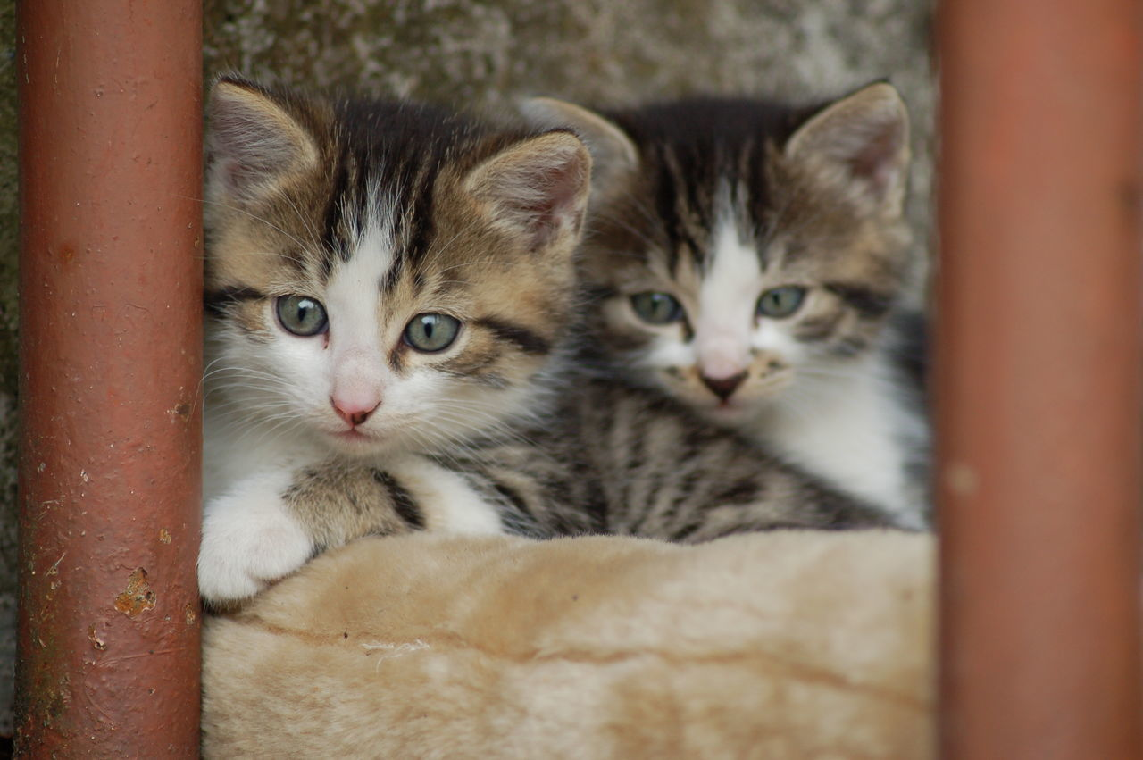 Close-Up Of Kittens By Wall