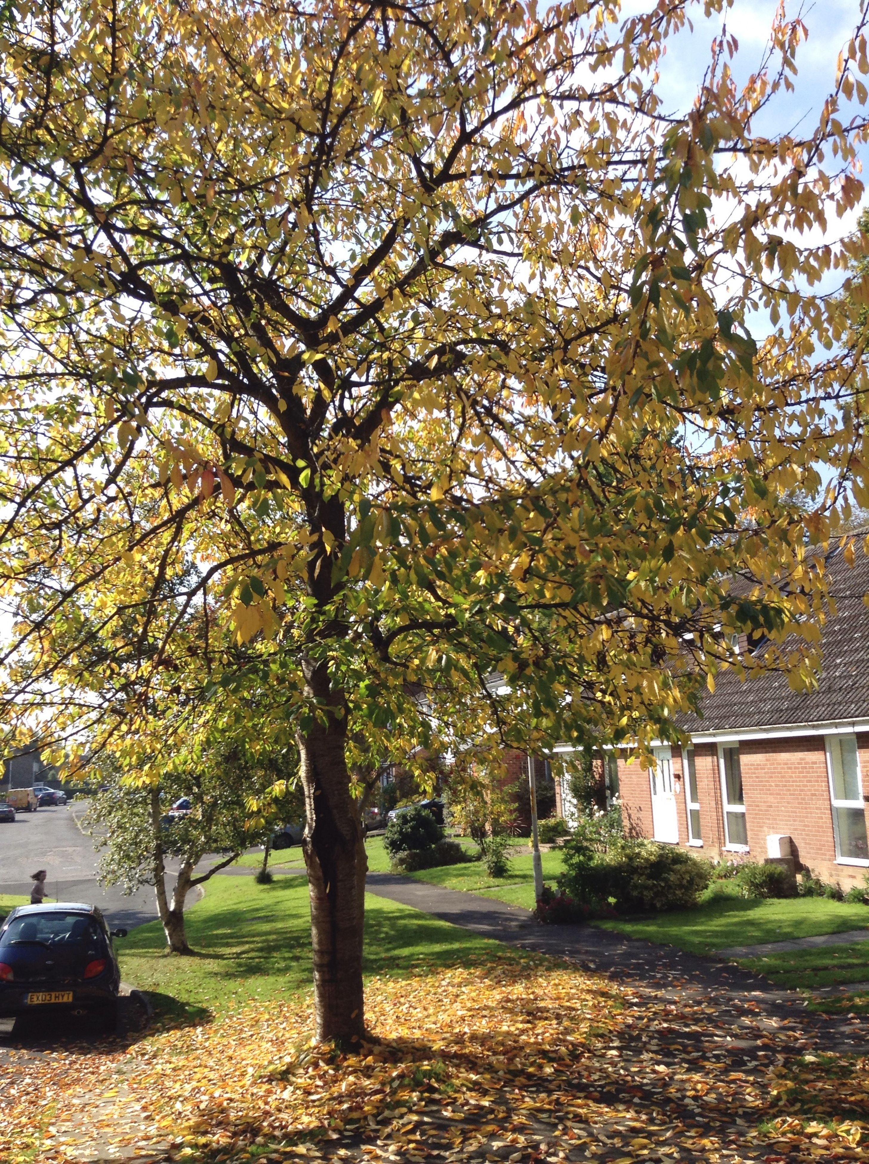 tree, autumn, change, building exterior, branch, growth, built structure, architecture, season, park - man made space, yellow, nature, sunlight, day, transportation, outdoors, leaf, tranquility, street, park