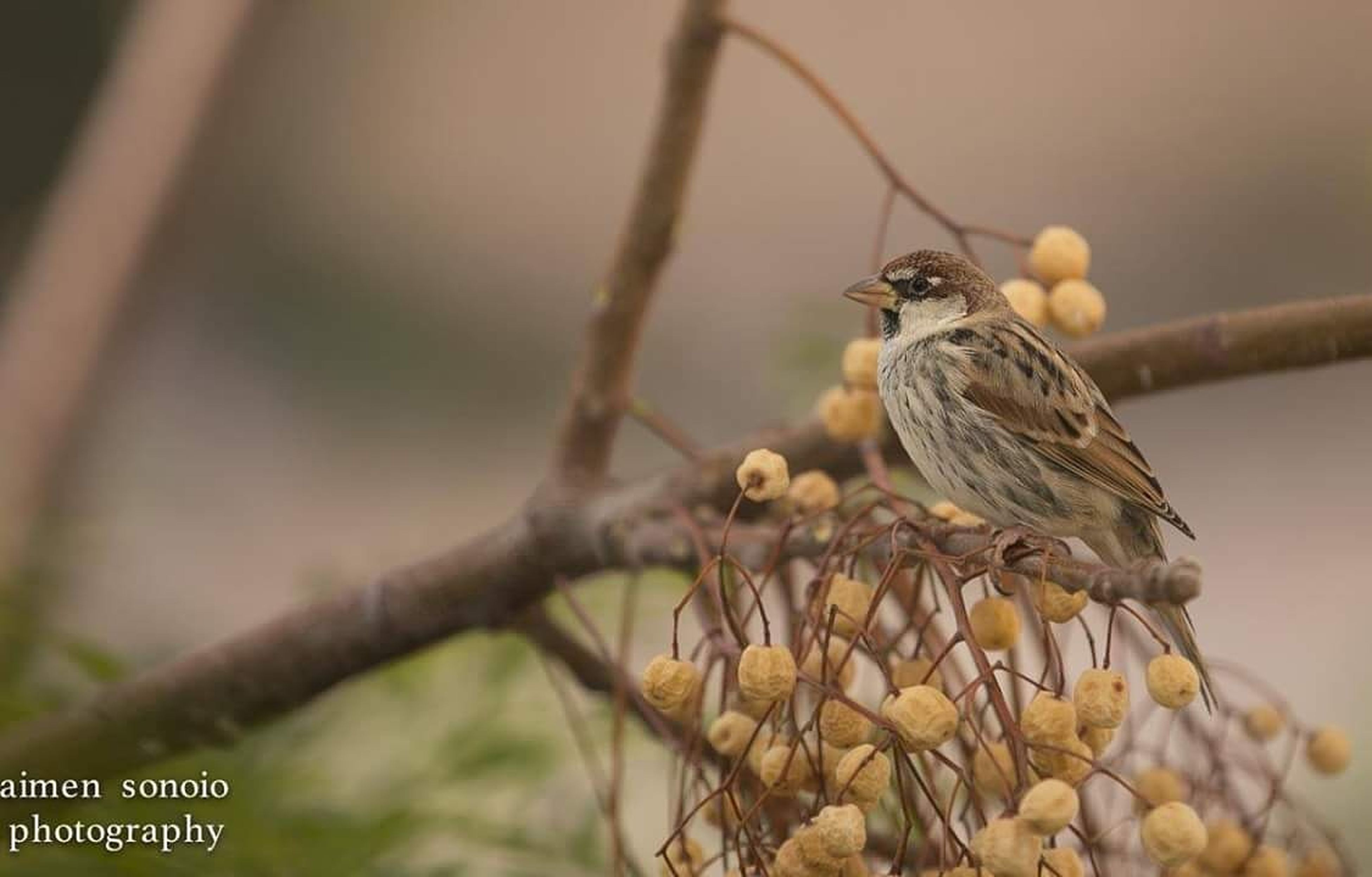 animal wildlife, animals in the wild, bird, nature, animal themes, yellow, perching, beauty in nature, branch, tree, songbird, outdoors, close-up, food, no people, insect, day, living organism