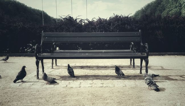 Park Kasprowicza ławka Bench Gołębie Pigeons Relaxing Birds Ptactwo