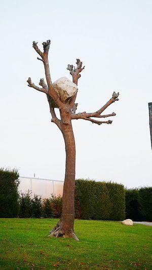 Outdoors Sculpture Tree Sky No People Venaria Reale Torino Ciao Amici