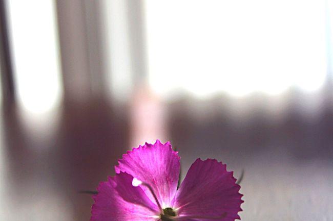 Pattern Pieces Halfflower Flower Purple