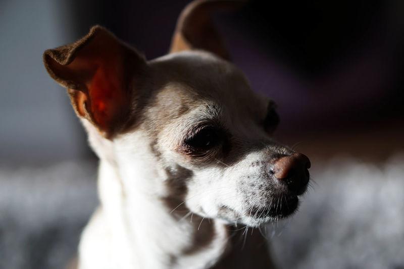 | When your 9 year old daughter takes hold of your camera with a great result! | No People Photography Photooftheday Animals Dog Ourdog Enjoying Life Animal Animal Love EyeEm Gallery Natural Light Animal Nose Doglover Capture The Moment Everyday Emotion Eyemphotography Eye4photography