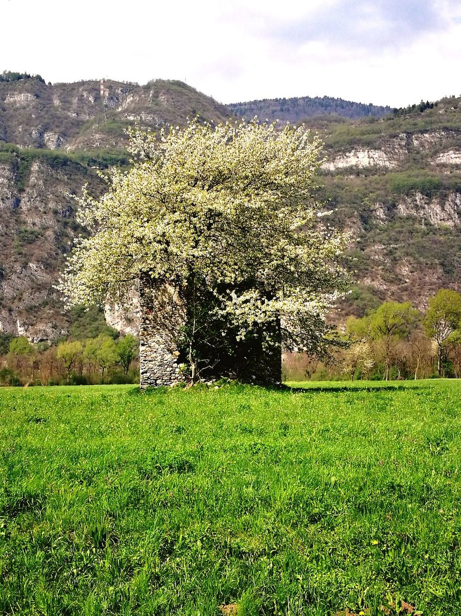 Nature Beauty In Nature Scenics Growth Flower Sky Landscape No People Grass Outdoors Cloud - Sky Mountain Day Tree