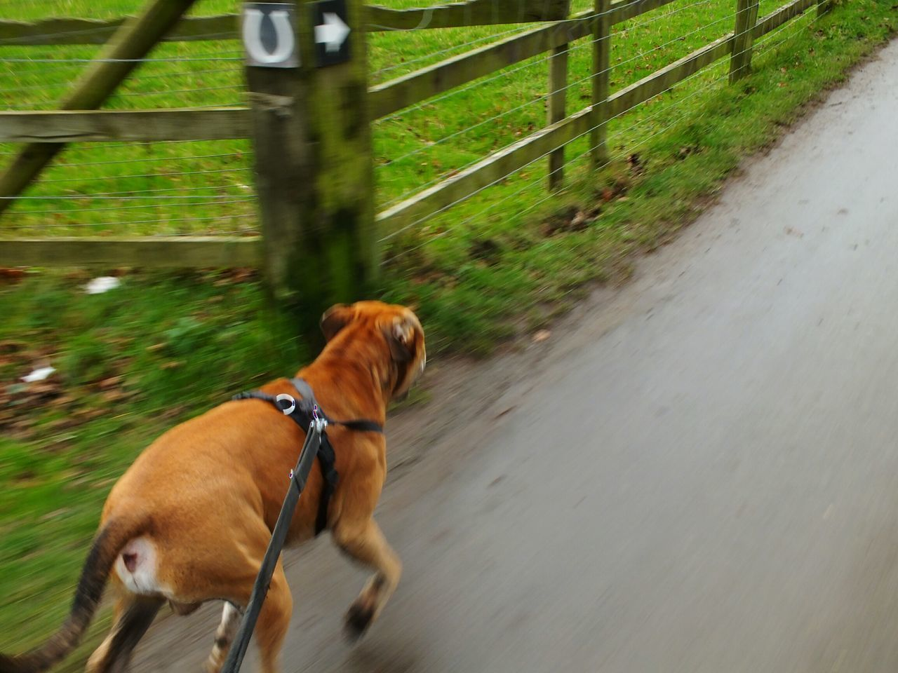 Dog Mushing Had To Go One Handed To Take This Milo Pulling Me On Scooter Nature On Your Doorstep Taking Photos Wintertime Alvaston Castle Country Park Taking Photos Protecting Where We Play