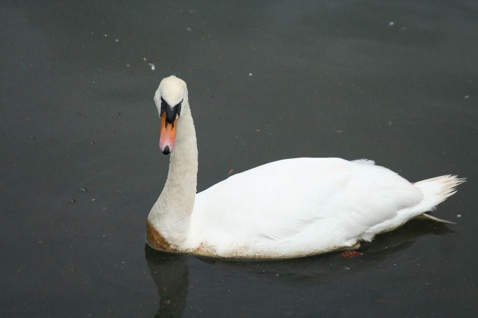 Beautiful stock photos of single, Beauty, Bird, Close-up, Darlington