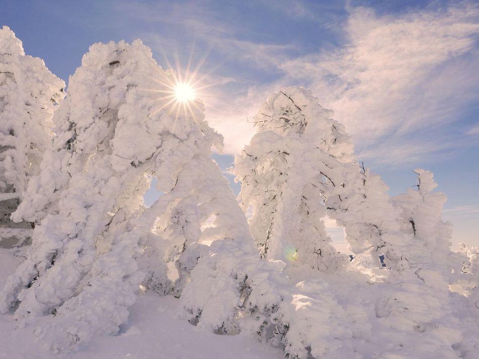 Beautiful stock photos of snow, Cloud - Sky, Cold Temperature, Collado-Villalba, Covering