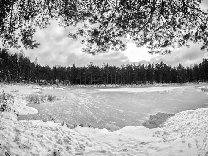 The small lake Måsatjern at falls first snowfall in Nesoddtangen, Norway Beauty In Nature Black & White Cold Temperature First Snow Forest Landscape Måsatjern Nature No People Outdoors Pine Tree Scenics Sky Small Lake Snow Tree Winter