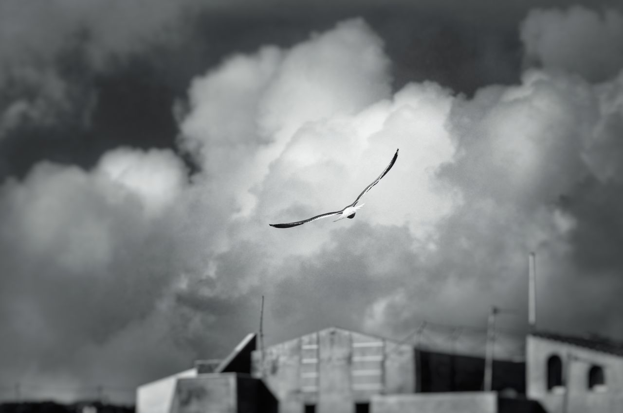 Blackandwhite Seagull SEAGULL IN FLIGHT Bird Flying Storm Cloud Cloud - Sky Outdoors Nature Thunderstorm Animal Themes Blackandwhite Photography Seagulls Storm Weather Clouds And Sky Flight Flying Bird Flying In The Sky EyeEm Nature Lover Eye4photography  Selective Focus Blurred Background Malephotographerofthemonth