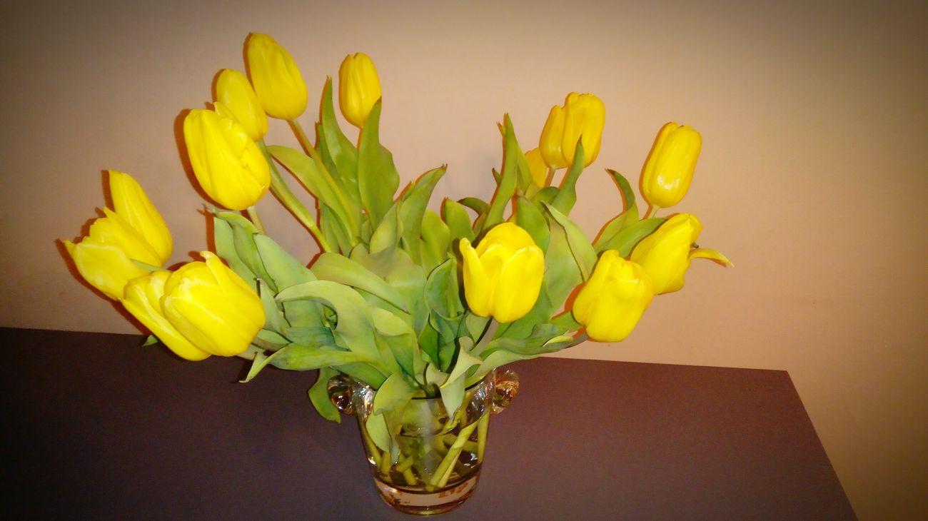 Flower Yellow Nature Kwiaty