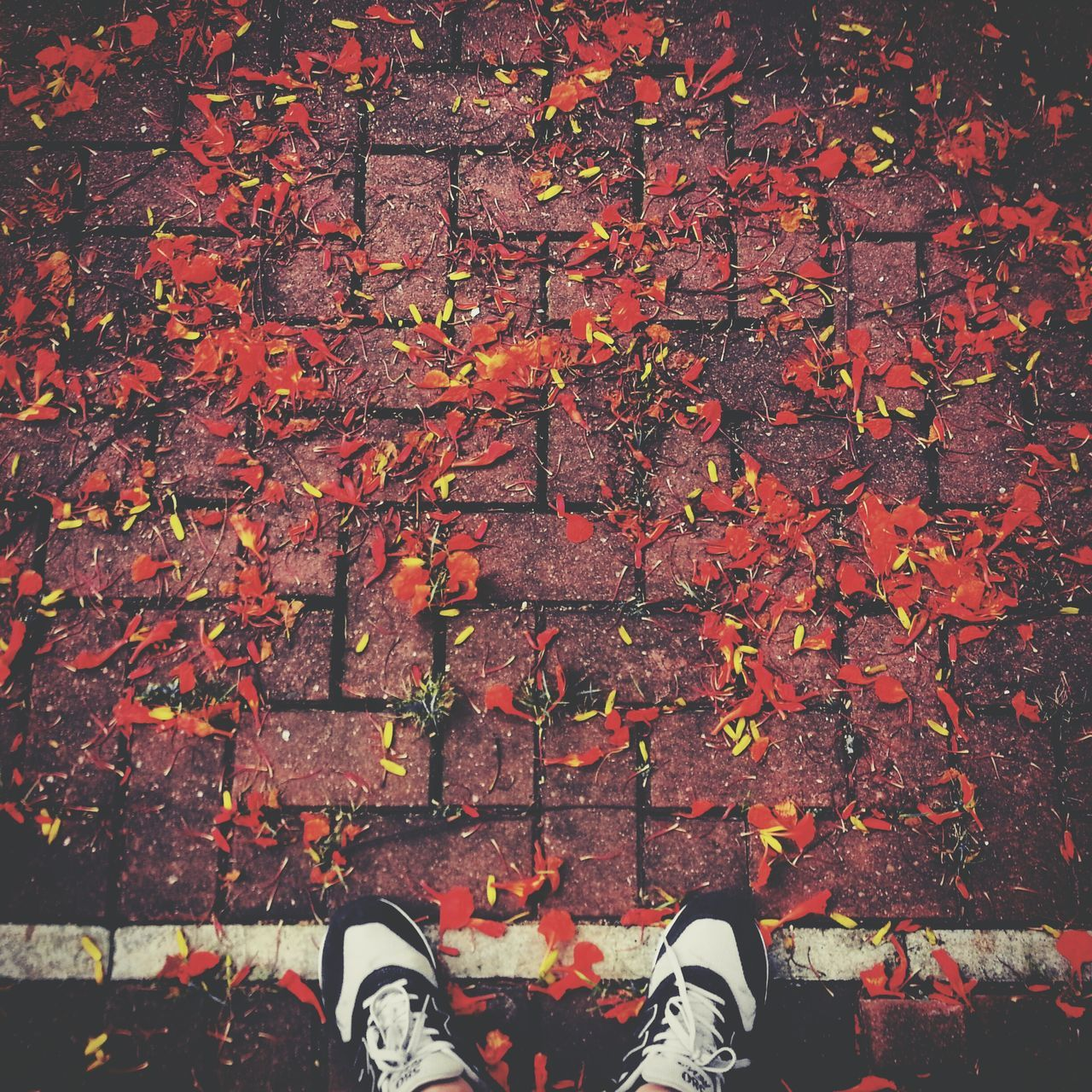 autumn, leaf, change, leaves, shoe, human leg, standing, fallen, low section, nature, human body part, outdoors, one person, canvas shoe, maple leaf, real people, day, people