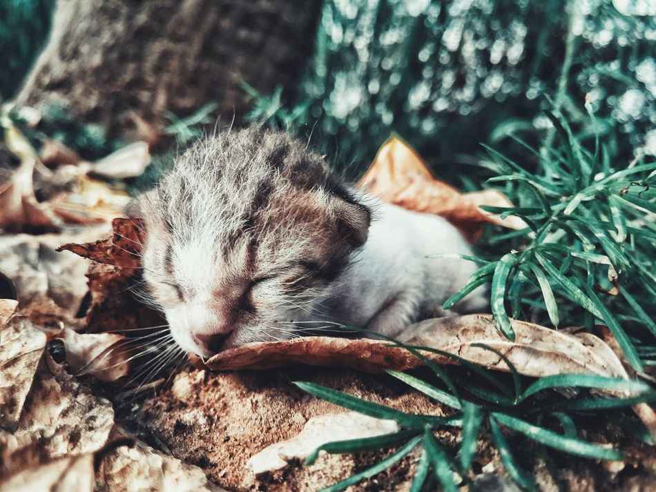 Beautiful stock photos of katzen, Abandoned, Autumn, Dead Plant, Forest