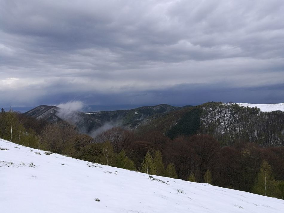 Snow Cold Temperature Winter Snowcapped Mountain Nature Mountain Cloud - Sky Landscape Polar Climate No People Environment Vacations Pinaceae Outdoor Pursuit Winter Sport Outdoors Sky Tree Day