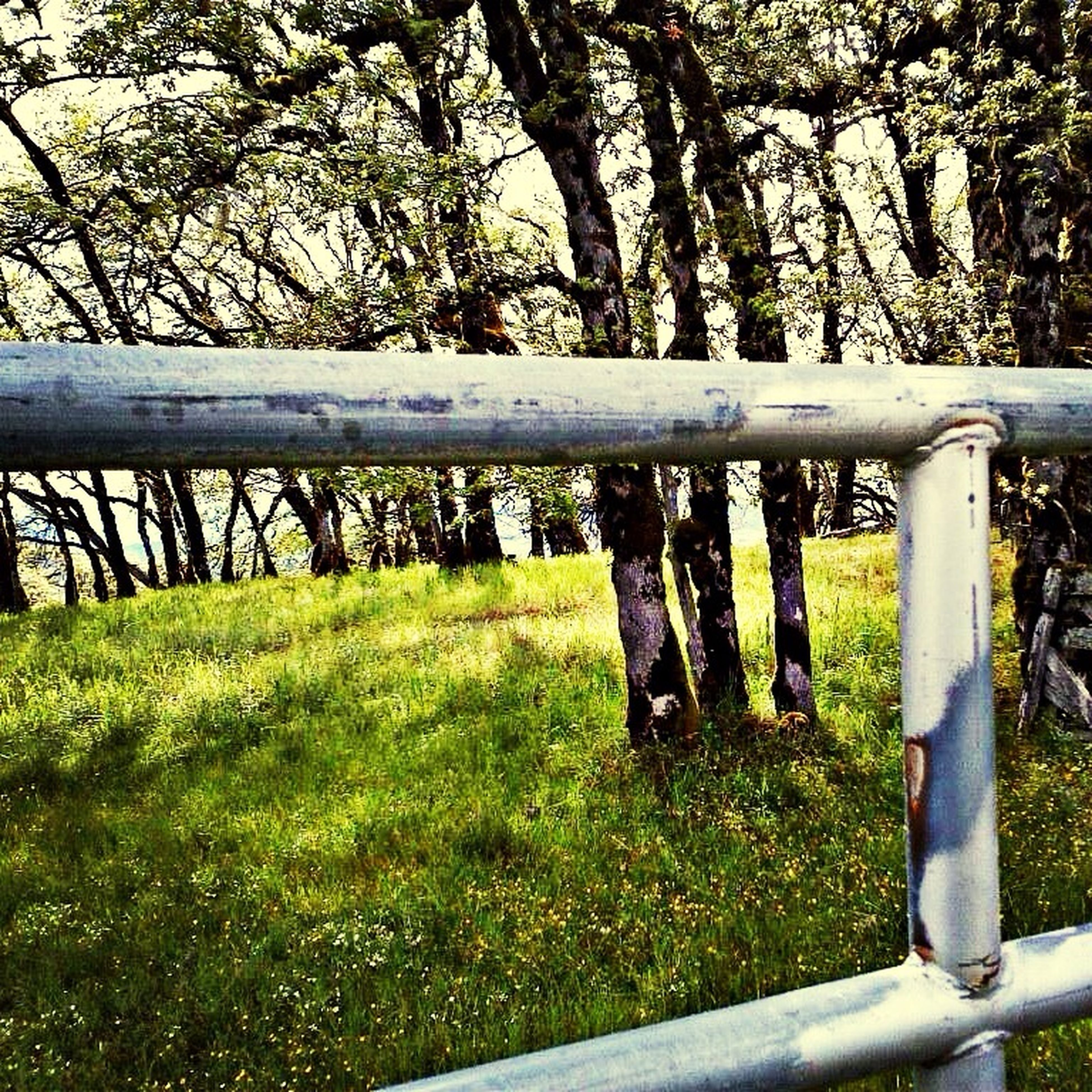 grass, fence, tree, green color, tranquility, railing, tree trunk, nature, protection, growth, park - man made space, safety, branch, field, grassy, tranquil scene, day, beauty in nature, wood - material, no people