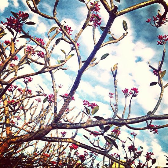 EyeEm Nature Lover Frangipani Trees Nature_collection