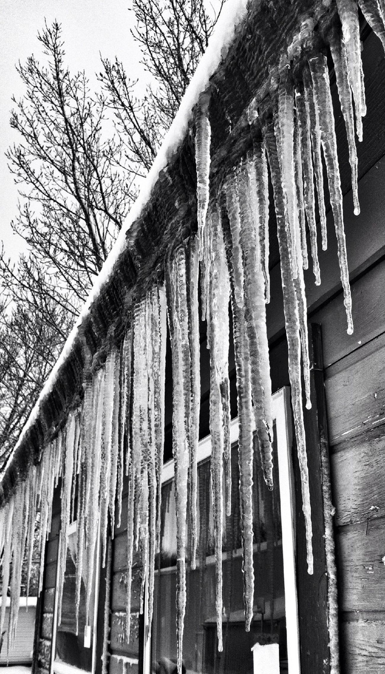 Winter, Iowa, Icicles