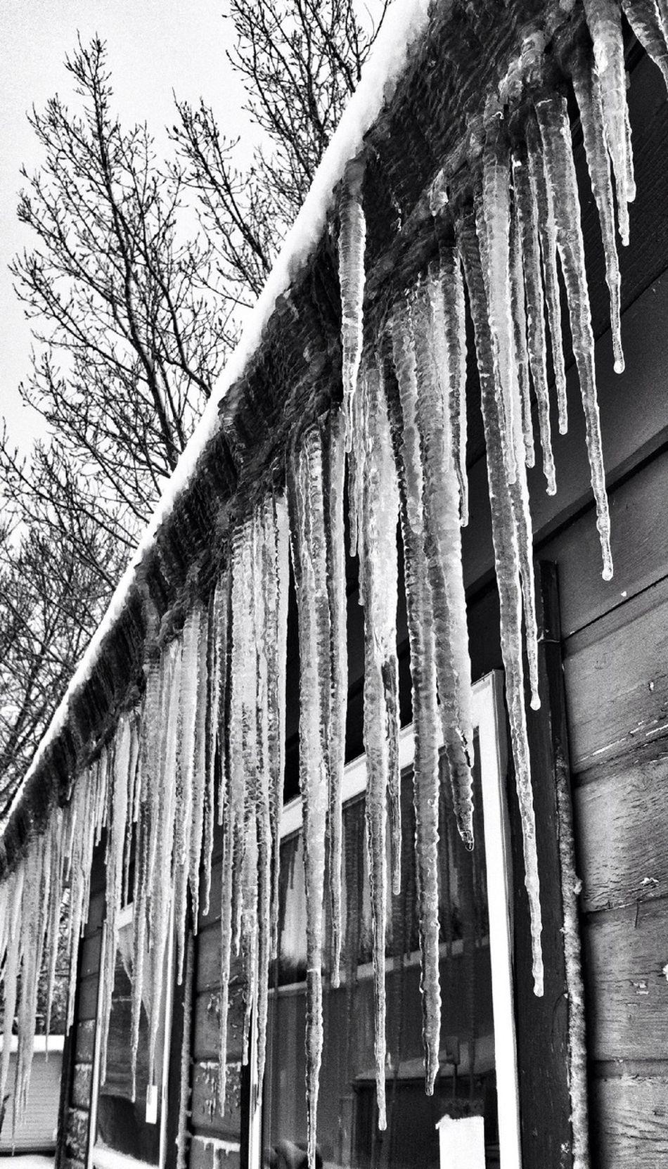 Winter, Iowa, Icicles