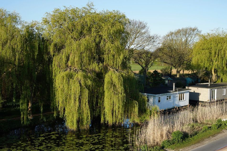 Houseboats under the trees in the early morning sun, Chichester Canal. Tree Outdoors Canal House Boat