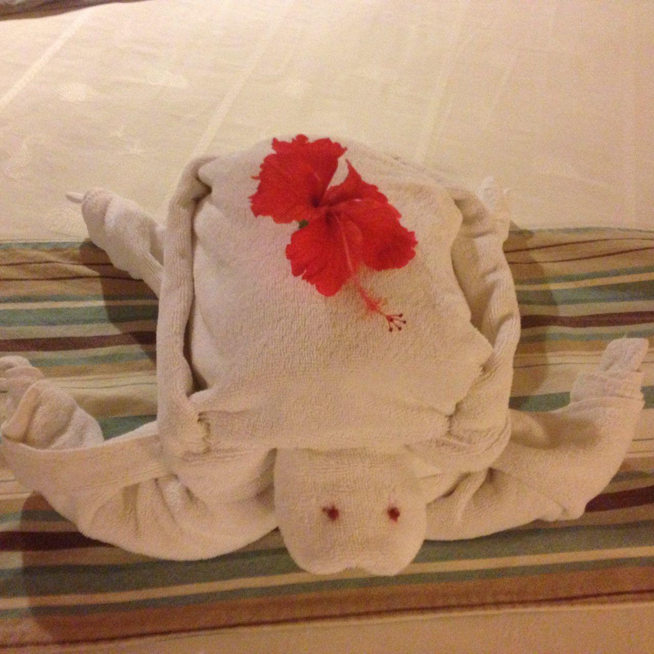 Towel Animal Enjoying Life