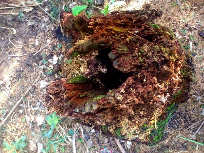 Critterspace Critter Rest Stop Critter Home Critter Shelter Critter Hotel Critterless Nature High Angle View Close-up Outdoors Growth Leaf Textured  No People Forest Day KYUSHU Japan Photography