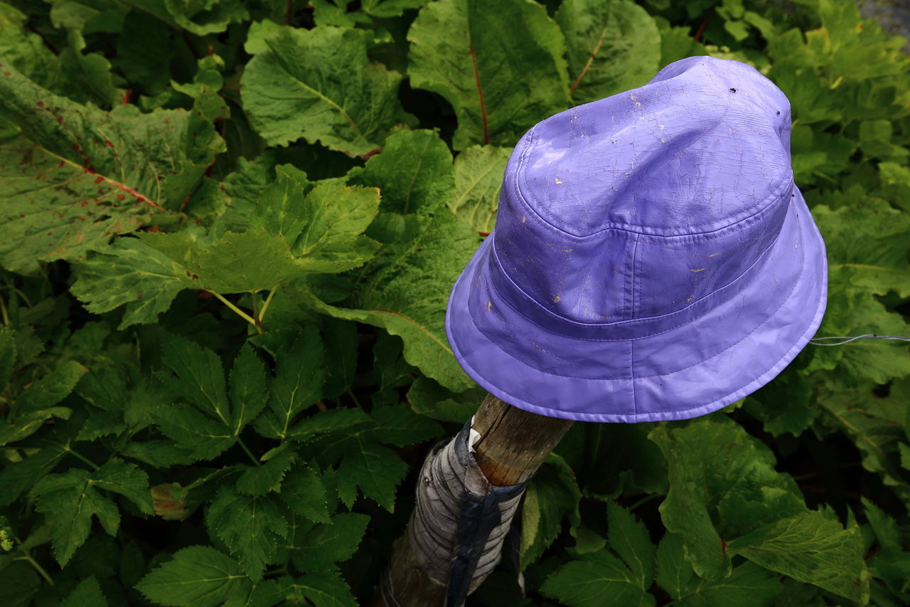Lost violet plastic hat put on a stake for recovery. Abandoned Close-up Eye4photography  TakeoverContrast Pivotal Ideas EyeEm Nature Lover Green Hat Kept Leaves Lilac Lonely Lost Natural Pattern Nature No People Outdoors Plastic Post Preserved Purple Saved Stake Violet Wood
