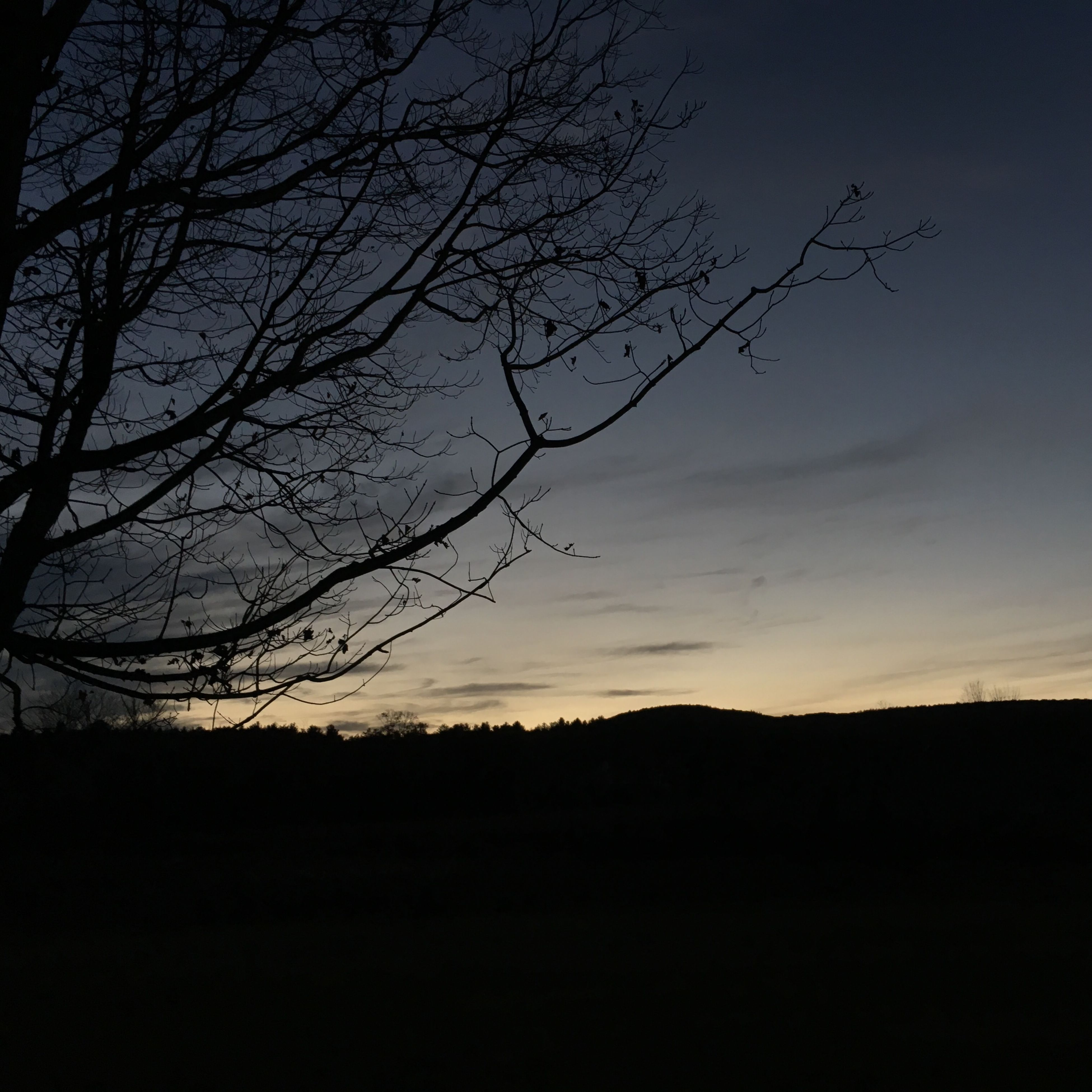 silhouette, sunset, bare tree, tranquility, tranquil scene, scenics, tree, beauty in nature, branch, sky, nature, landscape, idyllic, dark, dusk, outline, orange color, outdoors, no people, non-urban scene