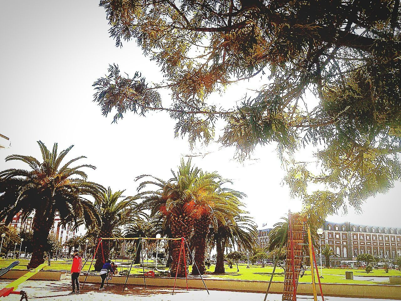tree, day, real people, park - man made space, growth, palm tree, outdoors, men, large group of people, sky, clear sky, nature, people