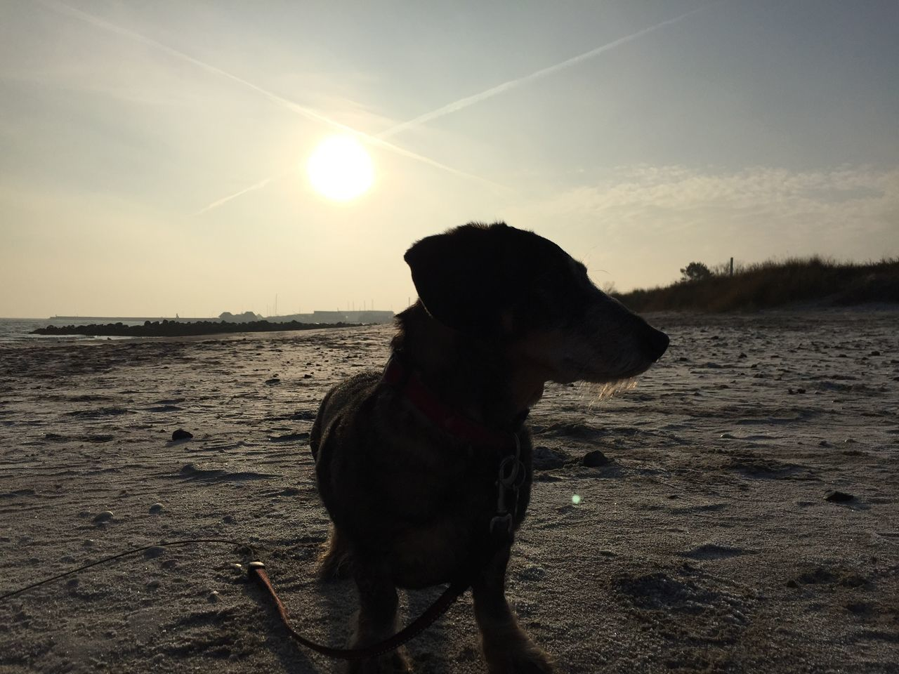 dog, pets, one animal, domestic animals, animal themes, sunlight, sunset, mammal, sun, sky, nature, no people, beach, outdoors, sand, water, beauty in nature, day