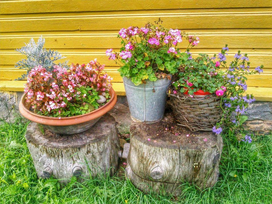 Beautiful stock photos of garden, , Day, Flower, Flower Pot